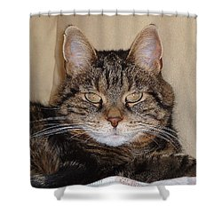 Tripod Shower Curtain by Guy Whiteley