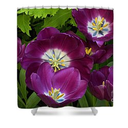 Triumph Tulips Negrita Variety Shower Curtain