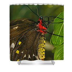 Shower Curtain featuring the photograph Troides Helena Butterfly  by Olga Hamilton