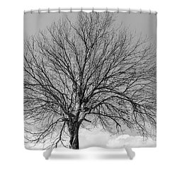 Tropic Winter Shower Curtain