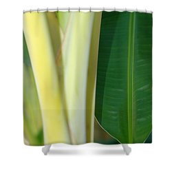 Tropical Banana Tree Shower Curtain