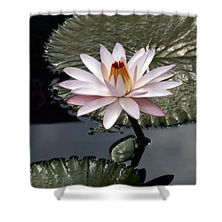 Tropical Floral Elegance Shower Curtain