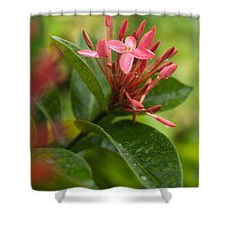 Tropical Flowers In Singapore Shower Curtain