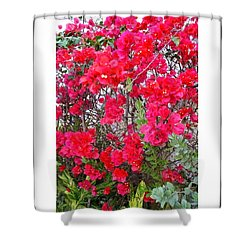 Tropical Flowers Of South Florida Shower Curtain by Dora Sofia Caputo Photographic Design and Fine Art