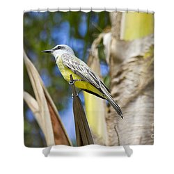 Shower Curtain featuring the photograph Tropical Kingbird by Teresa Zieba