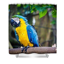 Tropical Parrot Shower Curtain by Sara Frank
