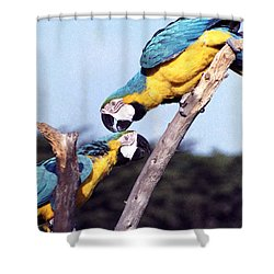 Tropical Parrots In Love Shower Curtain