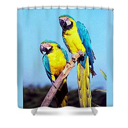 Tropical Parrots In San Francisco Shower Curtain