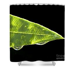 Tropical Reflections Shower Curtain by Anne Rodkin