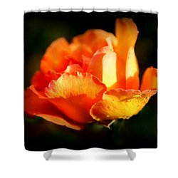 Tropicana Shower Curtain by Karen Wiles