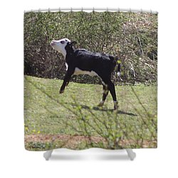 Trotting Along Shower Curtain