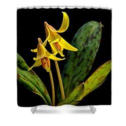 Trout Lilies Shower Curtain