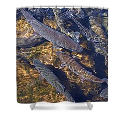Trout Prints Rainbow Lake River Trout Shower Curtain by Baslee Troutman