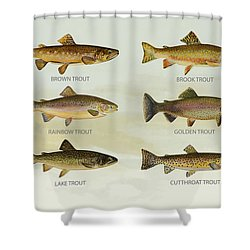 Trout Species Shower Curtain