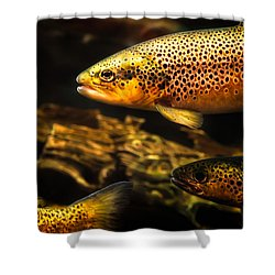 Trout Swiming In A River Shower Curtain by Bob Orsillo