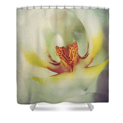 True Shower Curtain by Laurie Search