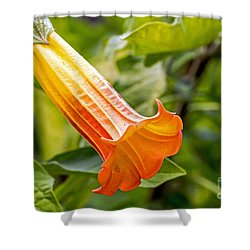 Shower Curtain featuring the photograph Trumpet Flower by Kate Brown