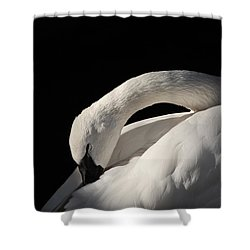 Trumpeter Shower Curtain by Karol Livote