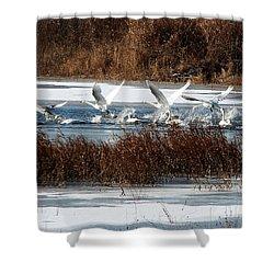 Shower Curtain featuring the photograph Trumpeter Swans by John Freidenberg