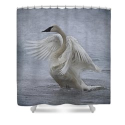 Shower Curtain featuring the photograph Trumpeter Swan - Misty Display by Patti Deters