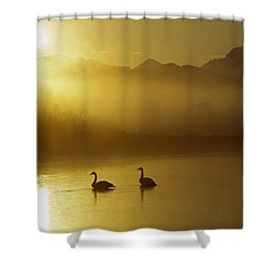 Trumpeter Swan Pair At Sunset Shower Curtain by Michael Quinton