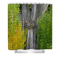 Trunk Lines Shower Curtain
