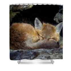 Fox Kit - Trust Shower Curtain by John Vose