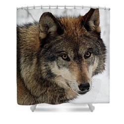 Shower Curtain featuring the photograph Trusting by Richard Bryce and Family