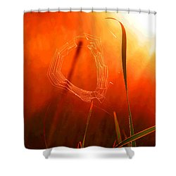 The Spider's Web In Golden Sunlight Shower Curtain