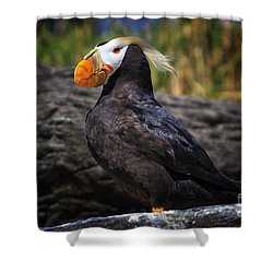 Tufted Puffin Shower Curtain by Mark Kiver