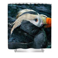Tufted Puffin Profile Shower Curtain by Jennie Breeze