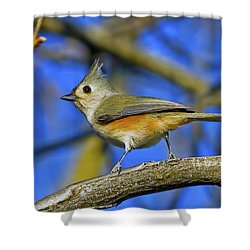 Tufted Titmouse Shower Curtain by Gary Holmes
