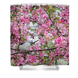 Tufted Titmouse In A Pear Tree Shower Curtain