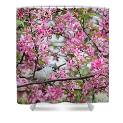 Tufted Titmouse In A Pear Tree Square Shower Curtain