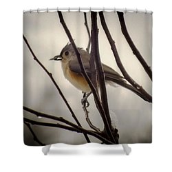 Tufted Titmouse Shower Curtain by Karen Wiles