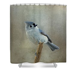 Tufted Titmouse Watching Shower Curtain by Sandy Keeton