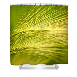 Tufts Of Ornamental Grass Shower Curtain by  Onyonet  Photo Studios
