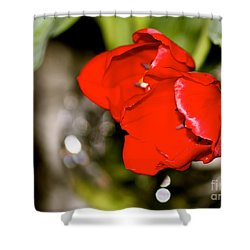 Shower Curtain featuring the photograph Tuips In Red Study 5 by Cathy Dee Janes