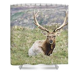 Tule Elk Bull Shower Curtain by Priya Ghose