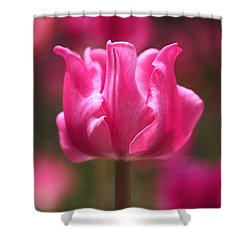 Tulip At Attention Shower Curtain by Rona Black