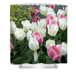 Purple And White Tulips Shower Curtain by Catherine Gagne