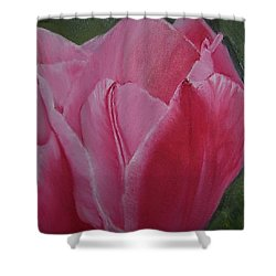 Tulip Blooming Shower Curtain