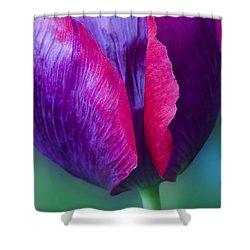 Tulip Bright  Shower Curtain
