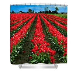 Tulip Cornucopia Shower Curtain by Inge Johnsson