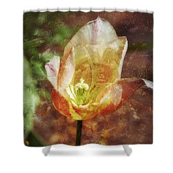 Shower Curtain featuring the photograph Tulip by Darla Wood