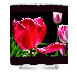 Tulip Extended Shower Curtain by Rona Black
