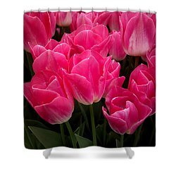 Shower Curtain featuring the photograph Tulip Festival - 19 by Hanza Turgul