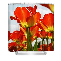 Shower Curtain featuring the photograph Tulip Field 1 by Rudi Prott