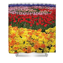 Shower Curtain featuring the digital art Tulip Field by Tim Gilliland