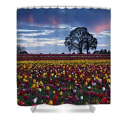 Tulip Field's Last Colors Shower Curtain by Wes and Dotty Weber